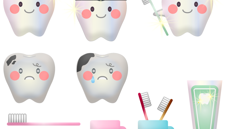 Des dents pour une bonne mastication
